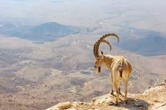 Makhtesh Ramon Royalty Free Stock Photography