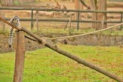 MAKI - DIERENTUIN - HONGARIJE Stock Foto