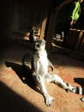 Maki Rolig lemur Maki i solen royaltyfri fotografi