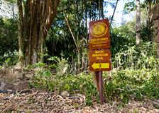 Makiki arboretum trail hike Royalty Free Stock Image
