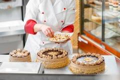 Making biscuit cake Stock Image