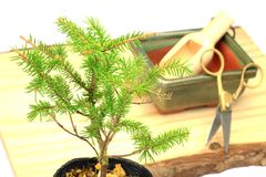 The making of bonsai Stock Photos