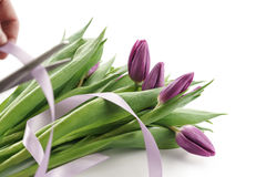 Making bouquet from fresh purple tulips with ribbon. On white background Royalty Free Stock Photography
