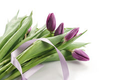 Making bouquet from fresh purple tulips with ribbon. On white background Royalty Free Stock Image