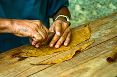 Making of cigar. Making of cuban cigar, plantation of Pinar del Rio region, Cuba Royalty Free Stock Image