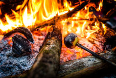 Making and cooking grilled apple over open camp fire. Royalty Free Stock Image