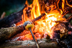 Making and cooking grilled apple over open camp fire. Stock Photo
