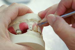 Making dentures, false teeth. Dental technician making new dentures with plaster model Royalty Free Stock Images