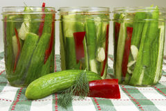 Making Dill Pickles Royalty Free Stock Photos