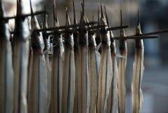 Making dried halfbeaks Royalty Free Stock Photo