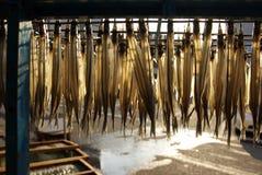Making dried halfbeaks Royalty Free Stock Images