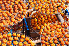 Making dried persimmon under sunlight Royalty Free Stock Photo