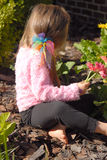 Making A Flower Bouquet. A little girl picking flowers from her mother's garden Royalty Free Stock Photos