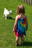 Making Friends. Little girl playing with the little lamb Stock Images