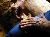 Making of handmade cuban cigar by old person stock photo