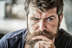Making hard decision. Man with beard and mustache thoughtful troubled. Bearded man concentrated face. Hipster with beard royalty free stock photo