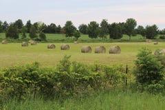Big rolls of hay stock photos