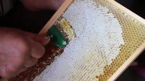 Making honey video stock footage