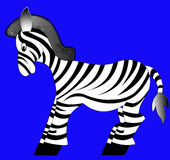 Making look younger zebra Royalty Free Stock Photo