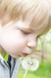 Young boy blowing on a dandelion. Little boy blowing on a dandelion weed Stock Photos