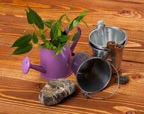 Making Mini Garden Stock Photography