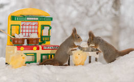 Making a omelette. Close up of two red squirrels standing  with a kitchen table with broken eggs Stock Image