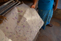 Making paper sheets from  mulberry pulp Stock Images