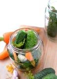 Making pickling cucumbers Stock Image