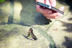 Making picture of butterfly. Hand making picture of butterfly on mobile phone at Kuala Lumpur Butterfly Park, Malaysia Royalty Free Stock Photos