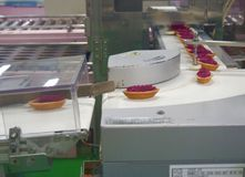 Making of Purple Potato Tart in Cake Factory Royalty Free Stock Photography