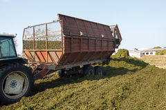 Making silage stocks Royalty Free Stock Photography