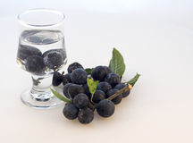 Making Sloe-Gin. Sloe-gin in the making - first fruits dropped into the gin Stock Photos