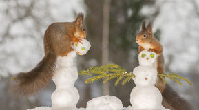 Making snowman Stock Images