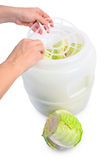 Making sour cabbage Stock Images