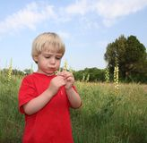 Making A Wish on Dandelion. Boy blows on a dandelion gone to seed, 'Making a Wish' outdoors in a park on a beautiful summer day Stock Photo