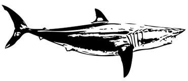 Mako shark fish II. vector Stock Image