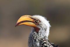 Makora fågel Arkivfoto