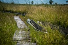 Makoro canoes delta Botswana de Okavango imagem de stock