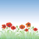 makową czerwone kwiaty Obrazy Stock