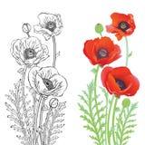 makową czerwone kwiaty Obrazy Royalty Free