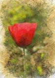 makowa czerwień Obrazy Royalty Free