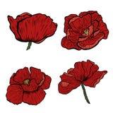 Makowa kwiat ręka rysująca Może używać w projekta purpose ilustracja, wektor - zapas Zdjęcie Stock
