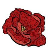 Makowa kwiat ręka rysująca Może używać w projekta purpose ilustracja, wektor - zapas Zdjęcia Royalty Free