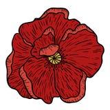 Makowa kwiat ręka rysująca Może używać w projekta purpose ilustracja, wektor - zapas Obraz Stock