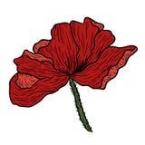 Makowa kwiat ręka rysująca Może używać w projekta purpose ilustracja, wektor - zapas Zdjęcia Stock