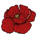 Makowa kwiat ręka rysująca Może używać w projekta purpose ilustracja, wektor - zapas Obraz Royalty Free