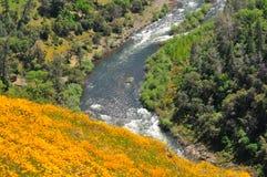 Makowa rzeka Zdjęcie Royalty Free