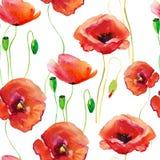 Makowi kwiaty, akwareli ilustracja Obrazy Royalty Free