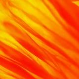 Makowy kwiatu 273 papaver Obraz Royalty Free