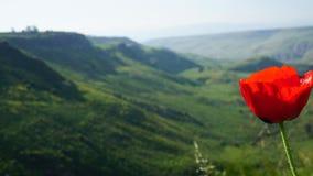 Makowy ziarno r w wzgórze golan zdjęcia stock